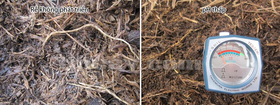 đất chua và cách cải tạo đất chua